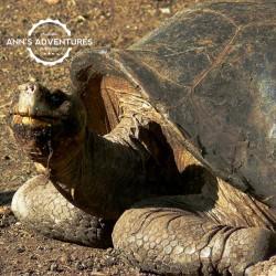 04-giant-tortoise-2