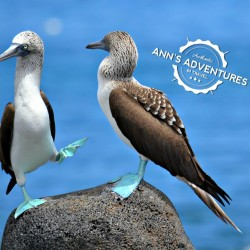07-blue-footed-