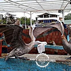 09-ataque-pelicano-web